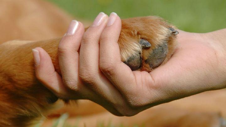 La app neuquina para denunciar maltrato animal