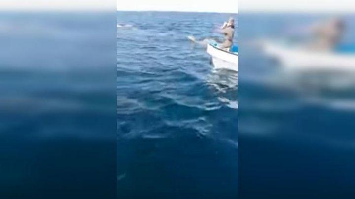 Extraño animal nadaba en el mar y cuando se acercaron, llegó la sorpresa. VIDEO