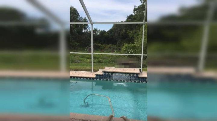 Estaba tranquilo en su piscina, cuando se topó una escalofriante escena. Mirá