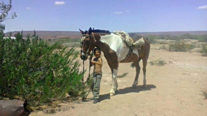 """Al nene que perdió a su caballo le dieron doble """"premio"""""""
