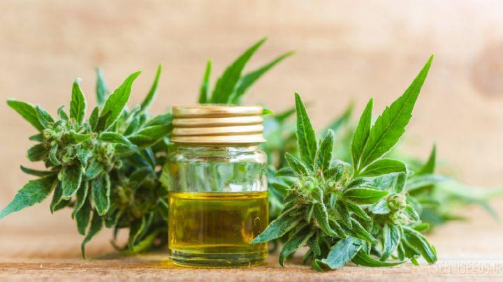 Brasil aprobó el uso del cannabis como medicina