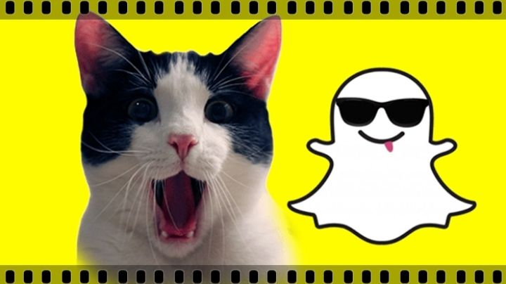 Gobierno da una conferencia en vivo con el ¡filtro de gato de Snapchat!. Mirá