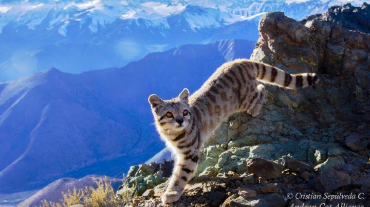 Neuquén tiene muchos animales en peligro de extinción