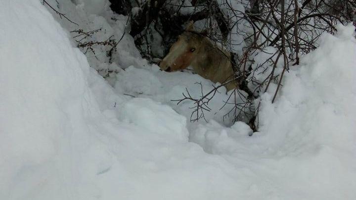 ¡Atrapados en la nieve! Así fue el épico rescate de animales en medio de la tormenta