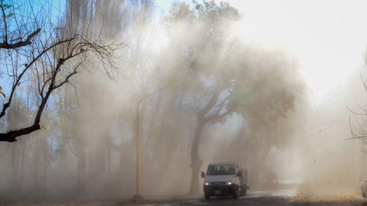 Temporal de viento: hubo cortes de luz, árboles caídos y destrozos en Neuquén Capital